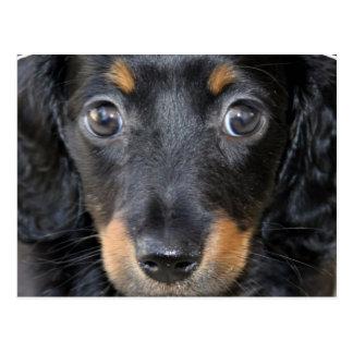 Daschund Puppy Dog Postcard
