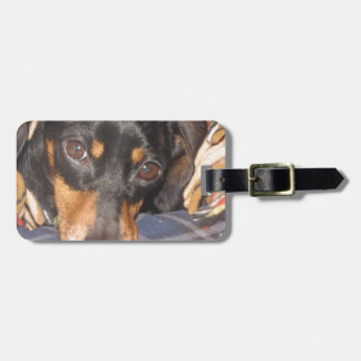 Daschund Weener Dog face Tags For Luggage