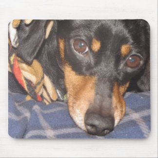 Daschund Weener Dog face Mouse Pad