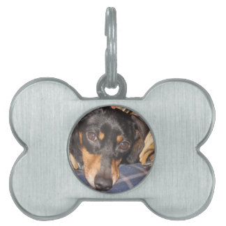 Daschund Weener Dog face Pet Tag