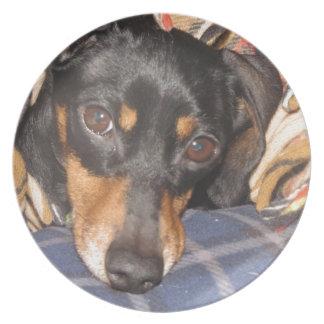 Daschund Weener Dog face Dinner Plate