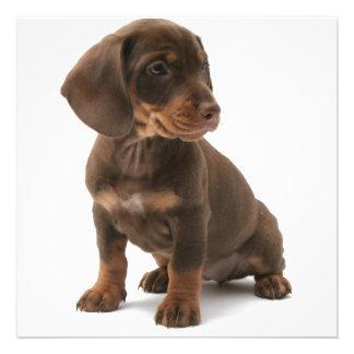 Dashchund Puppy Dog Invitation