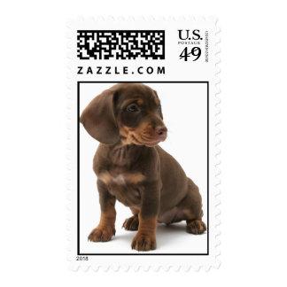Dashchund Puppy Dog Postage Stamp