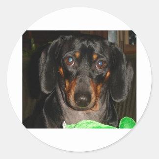 Dashshund Doggie Classic Round Sticker