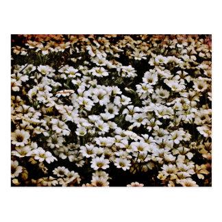 Dasies aumentado floral tarjeta postal