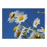 Dasy Flower Greeting Card