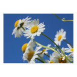 Dasy Flower Large Business Cards (Pack Of 100)