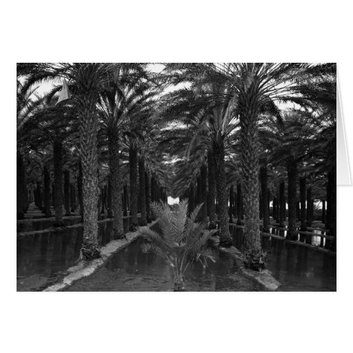 Date Palm Grove during Irrigation, 1966 Card