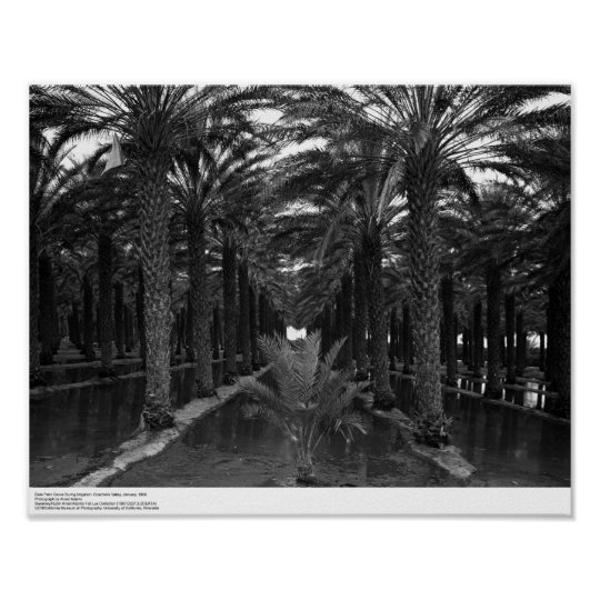 Date Palm Grove during Irrigation, 1966 Poster
