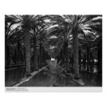 Date Palm Grove during Irrigation, 1966 Print