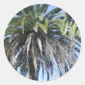 Date palm in Malaga Classic Round Sticker