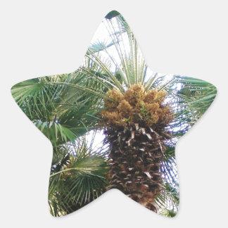 Date Palms Star Sticker