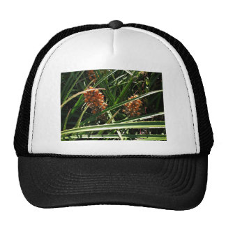 Dates in shrubs hats