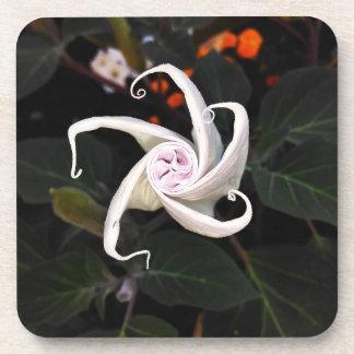 Datura Flower Bud Beverage Coaster
