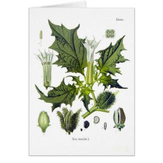 Datura stramonium greeting card