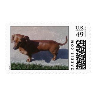 Dauchshund Stamp