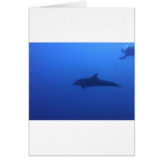 Dauphin Dolphin Customizable Card