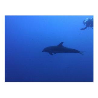 Dauphin Dolphin Customizable Postcard