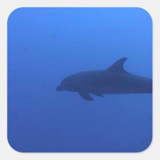 Dauphin Dolphin Customizable Square Sticker