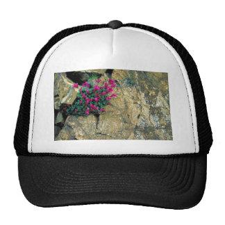 David's Penstemon Mesh Hats