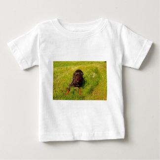 Davis Sullivan Bos Baby T-Shirt