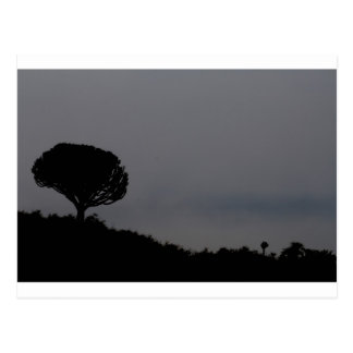 Dawn at Ngorongoro Crater Postcard