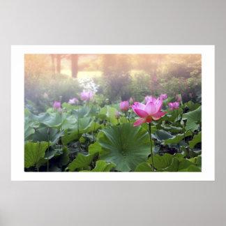 Dawn on Lotus Pond Print