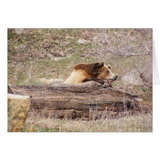 Day Dreaming Grizzly Card