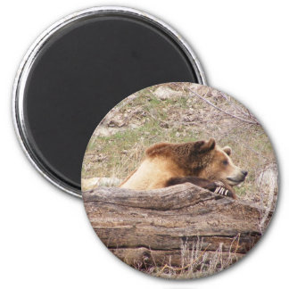 Day Dreaming Grizzly Magnet