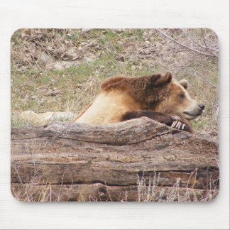 Day Dreaming Grizzly Mouse Pad