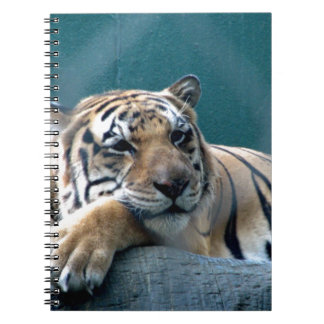 Day Dreaming Spiral Notebook