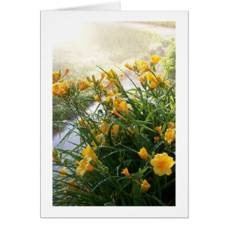 Day Lilies Card