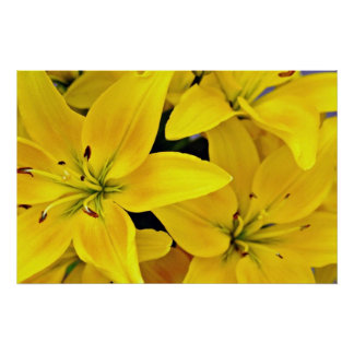 Day lilies  flowers poster
