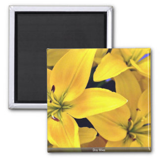 Day lilies magnets