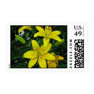 Day Lilies stamp