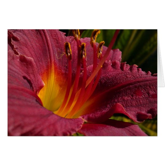 Day Lilly Note Card