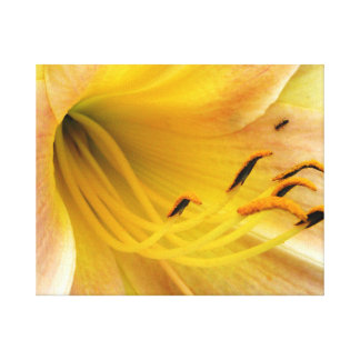 Day lily - canvas canvas print