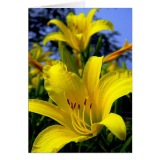 Day Lily Card