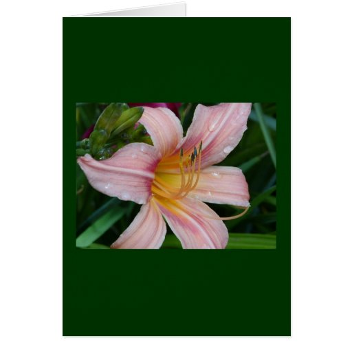 Day Lily Card, Catillac Cats