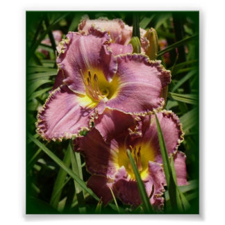 Day Lily Dusty Rose 5x7 print