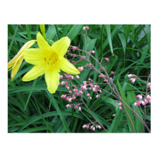 day lily in garden postcard