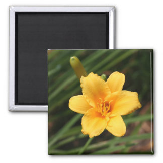 Day Lily Magnet