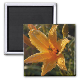 Day Lily Magnets