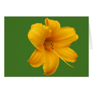 Day Lily Note Card