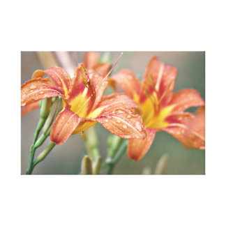 Day lily photography canvas print