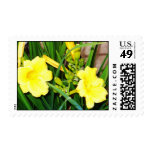 Day lily postage