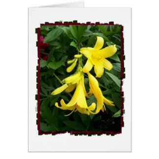 Day Lily Stages of Bloom Card