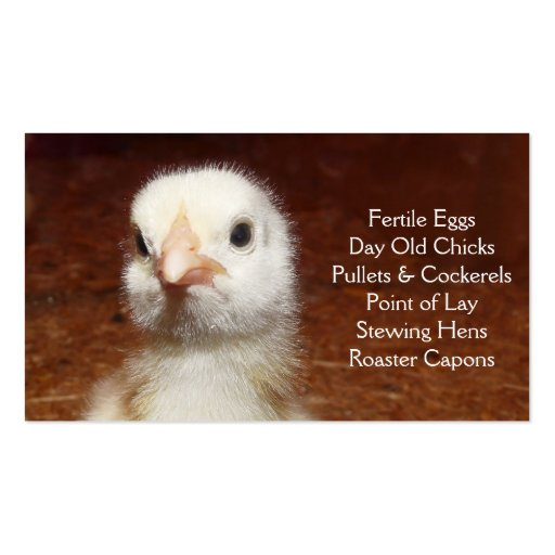 Day Old Chick - Layers or Broilers Farm Business Card