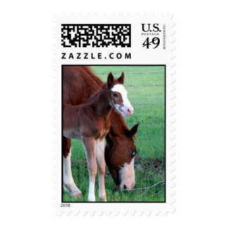 Day old colt, standing beside mom postage stamp
