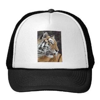 Daydreamer Trucker Hats